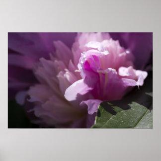 pink-rose-2012-05-20 poster