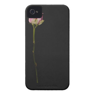 Pink rose 3 iPhone 4 cover