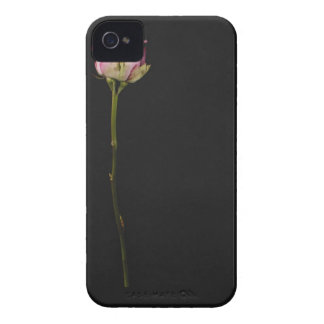 Pink rose 3 Case-Mate iPhone 4 cases