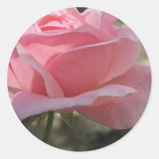 Pink Rose 3 Classic Round Sticker