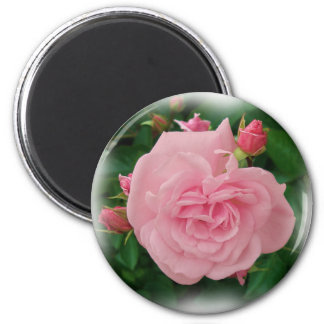 Pink rose and buds Magnet