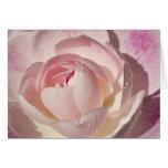 Pink Rose Blank Greeting Card