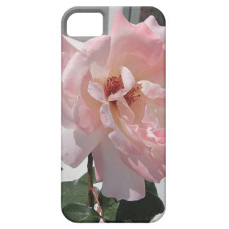 Pink Rose bloom iPhone 5 Cases