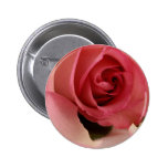 Pink Rose Blossom Button