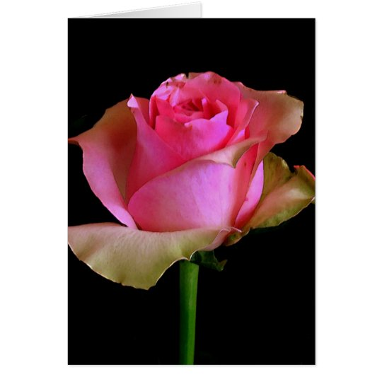 Pink Rose Blossom Card