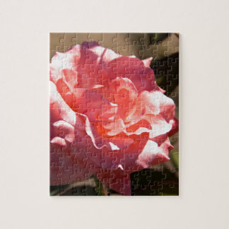 Pink Rose Blossom Jigsaw Puzzles