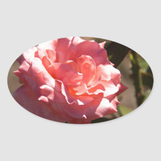 Pink Rose Blossom Oval Sticker