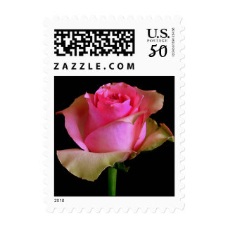 Pink Rose Blossom Postage
