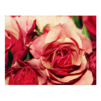 Pink Rose Bouquet Fine Art Photograph Postcard