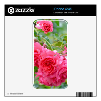 Pink  Rose Bouquet iPhone 4 Decals