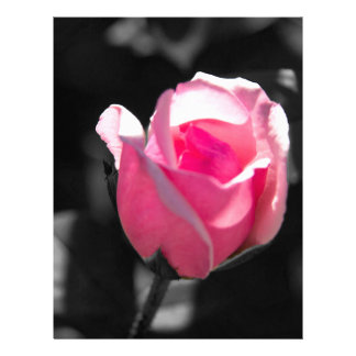 Pink Rose Bud BW Letterhead