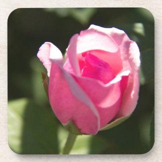 Pink Rose Bud Coaster