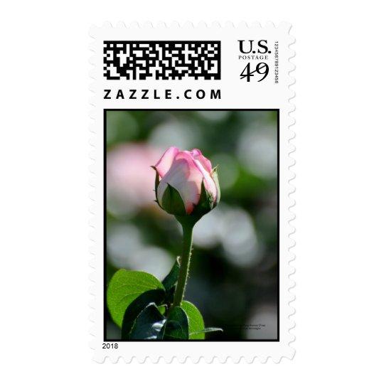Pink Rose Bud Postage