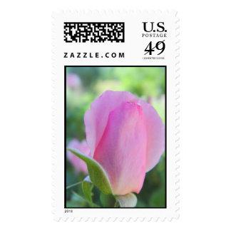 pink rose bud stamp