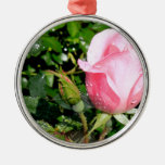 Pink Rose Bud with Water Drops Ornaments
