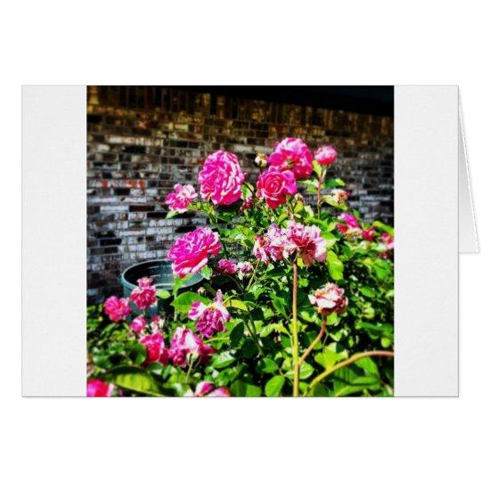Pink Rose Bush Card