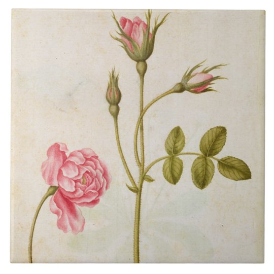 Pink Rose, c.1568 Ceramic Tile