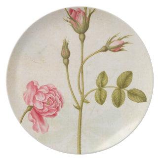 Pink Rose, c.1568 Dinner Plate