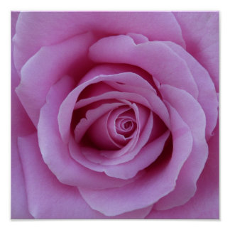 Pink Rose Center Print