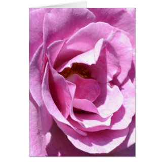 Pink Rose Close Up (macro) Card
