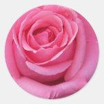 Pink Rose Close-Up Round Sticker