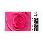 Pink rose close up stamps