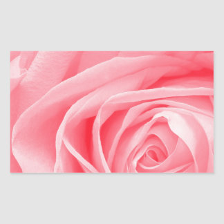 Pink Rose close up Stickers