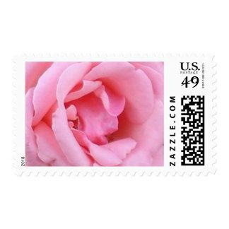 Pink Rose Closeup Wedding Perfect Postage Stamp