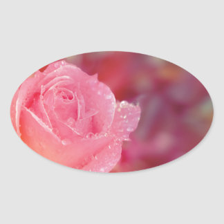 Pink rose covered by morning dew oval sticker