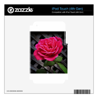 Pink Rose Decal For iPod Touch 4G