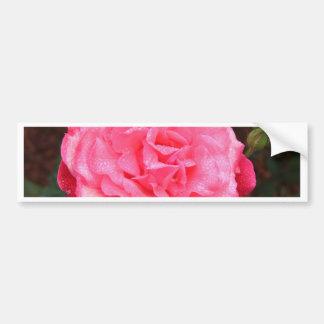 Pink Rose & Dew Bumper Sticker