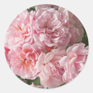 "Pink Rose ""Felicia"" Classic Round Sticker"