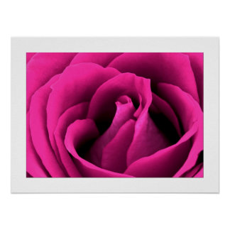 Pink Rose Fine Art  Photography  24x18 Posters