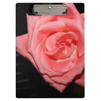 pink rose five string bass strings dark back music clipboard