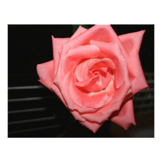pink rose five string bass strings dark back music customized letterhead