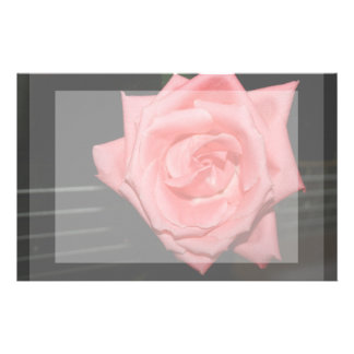 pink rose five string bass strings dark back music stationery