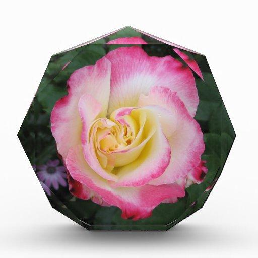 Pink Rose Flower Awards