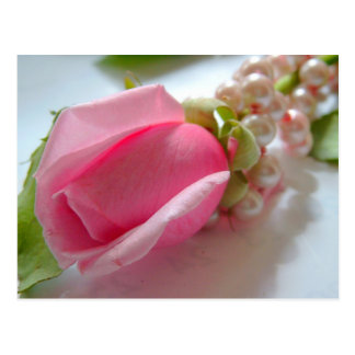 Pink rose flower bud with pearl necklace postcard