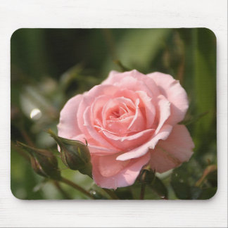 Pink rose flower mouse pad