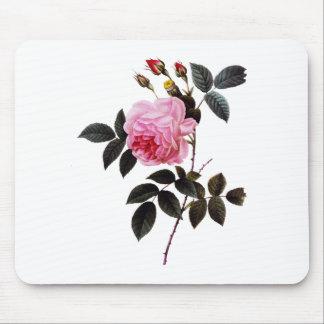 Pink rose  flower, Pierre Joseph Redouté Mouse Pad
