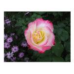 Pink Rose Flower Post Card