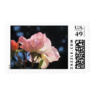 Pink Rose Flower Stamp