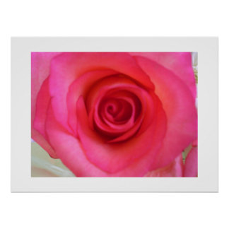 Pink Rose Flower Posters