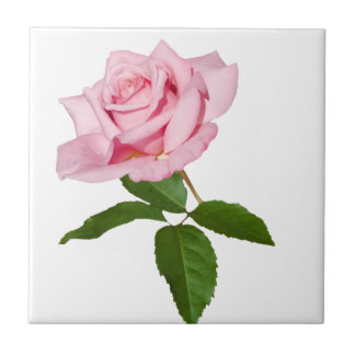 Pink Rose Flower with Dew Drops Customizable Tile