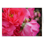 Pink rose flowers blank greeting card cards