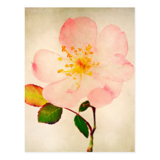 Pink Rose Flowers - Flower Roses on Watercolor Postcards