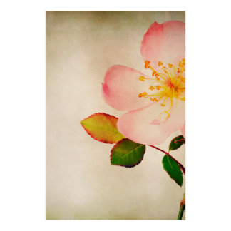 Pink Rose Flowers - Flower Roses on Watercolor Poster