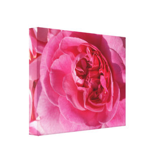 PINK ROSE FLOWERS PHOTOGRAPHY BACKGROUNDS WALLPAPE CANVAS PRINT