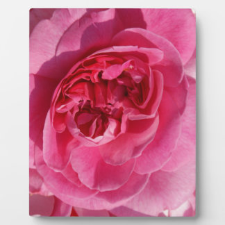 PINK ROSE FLOWERS PHOTOGRAPHY BACKGROUNDS WALLPAPE PLAQUE