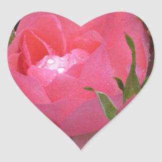 Pink rose flowers with water droplets in spring heart sticker